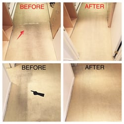 cleen carpet cleaning los angeles ca united states