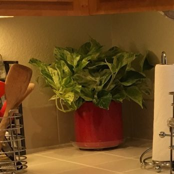 Photo Of Evergreen Nursery San Leandro Ca United States New Plant Looks