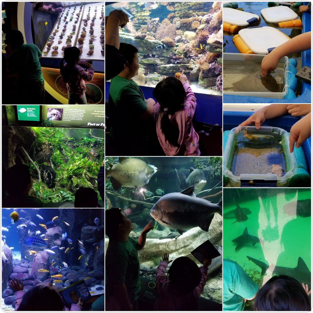 The New York Aquarium