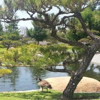 The Japanese Garden 1323 Photos 201 Reviews Botanical Gardens 6100 Woodley Ave