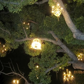 Chandelier Tree - 510 Photos & 162 Reviews - Local Flavour - 2811 ...