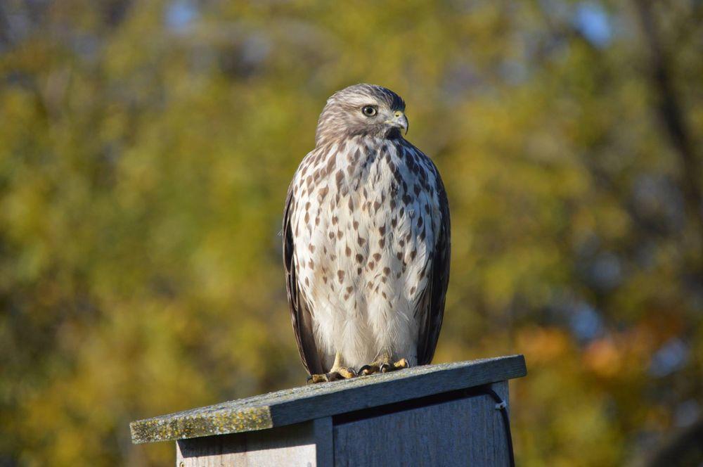 Ney Nature Center: 28238 Nature Center Ln, Henderson, MN