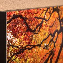 hd aluminum prints photography stores services 9808 ne 126th