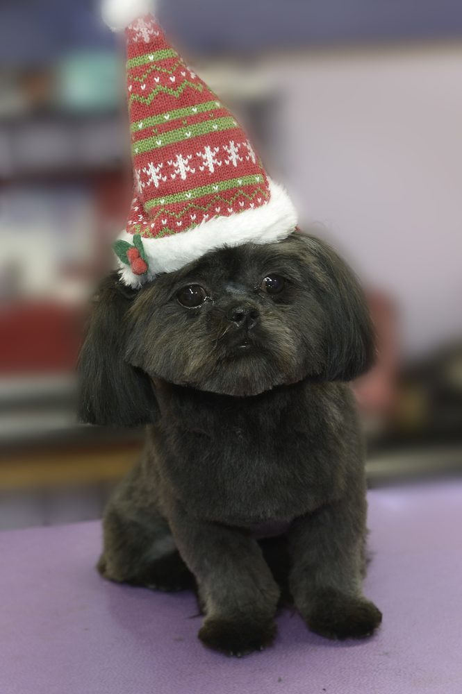 Debbie's Dog Grooming: 8692 Stone Rd, Algonac, MI