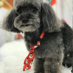 Miraculous Posh Pets Mobile Pet Spa 2019 All You Need To Know Before Home Interior And Landscaping Analalmasignezvosmurscom
