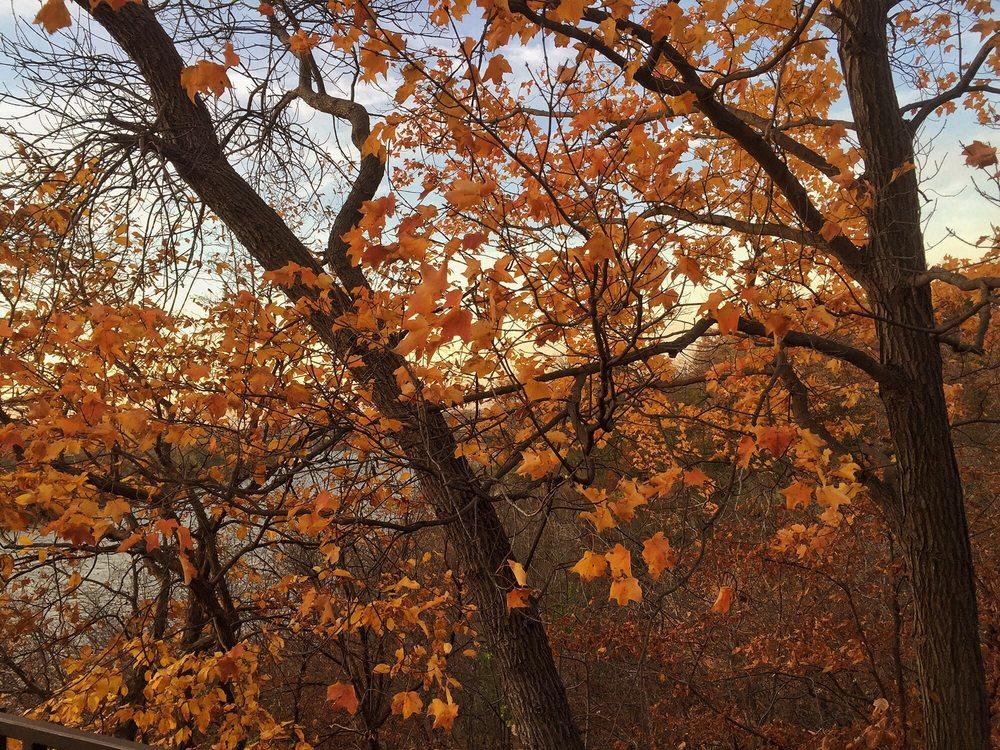 Shadow Falls Park: 1-33 Mississippi River Blvd S, Saint Paul, MN