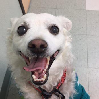Vacaville Pet Vet Clinic - 14 Photos & 25 Reviews