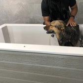 Dirty dogs self service dog wash and grooming 23 photos 13 photo of dirty dogs self service dog wash and grooming greensboro nc united solutioingenieria Choice Image