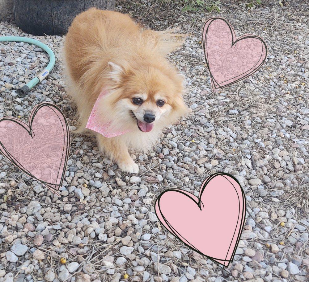 Sherry's Pampered Pets: 312 E Reinken Ave, Belen, NM