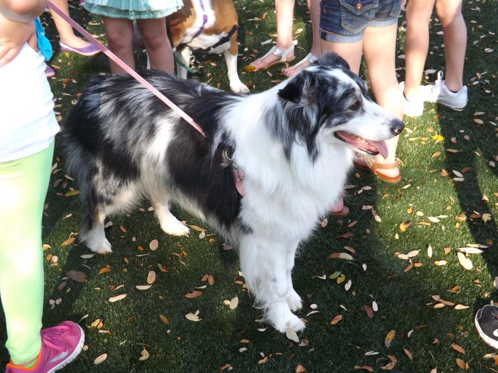 Reviews For Dog Training In Cedar Park Tx