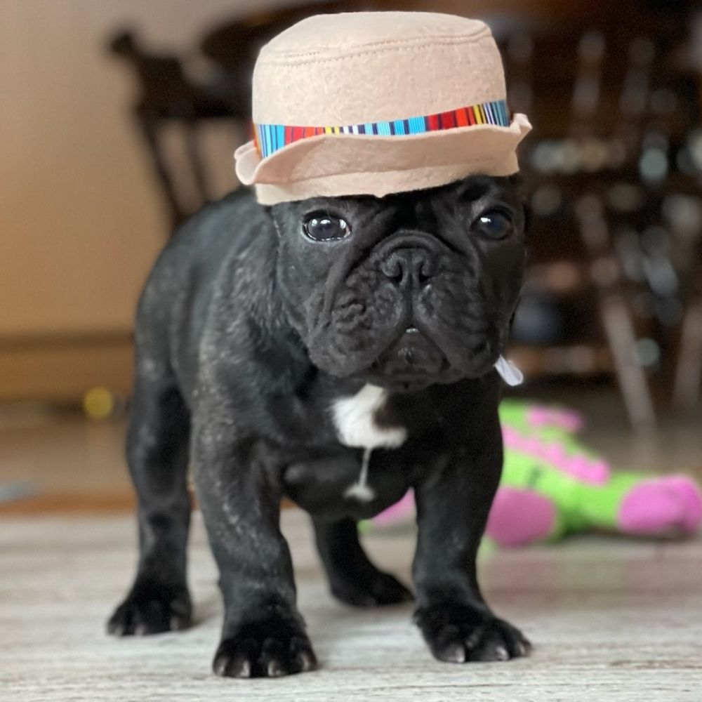 Breaking Bad Dog Training: Coventry, RI