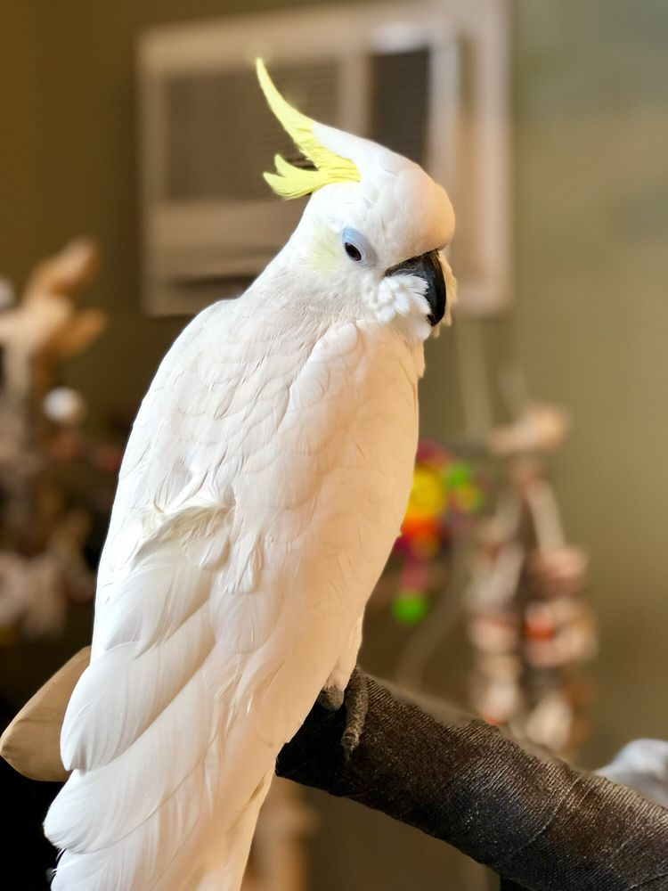 The Parrot and Bird Emporium - 116 Photos - Pet Stores - 360