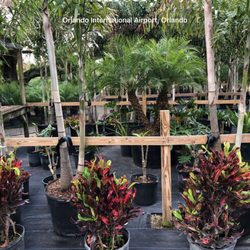 Photo Of Palm Gardens Nursery Orlando Fl United States
