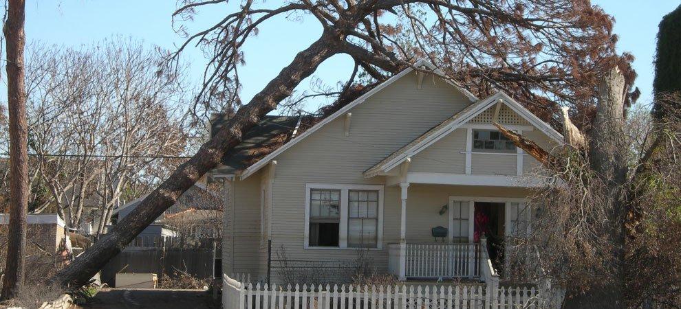 Economy Tree Services