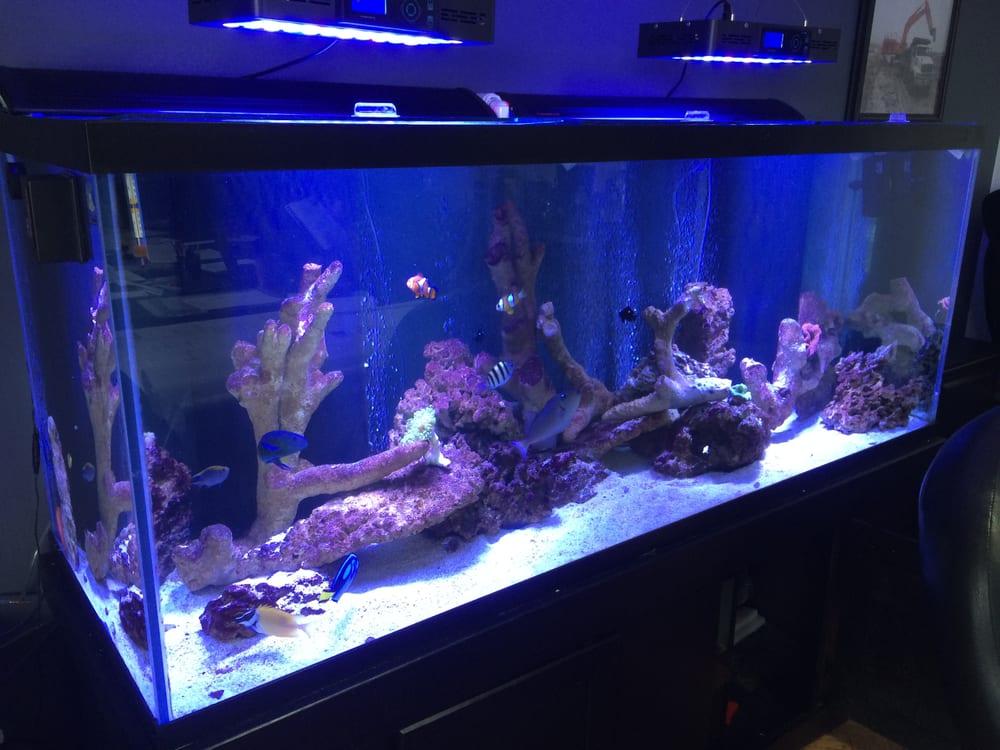 aquarium office. Photo Of Toronto Aquarium Service - Toronto, ON, Canada. Tedescon Office  Saltwater Fish Aquarium