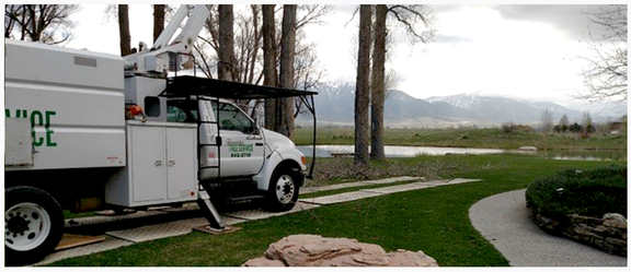 Fernridge Tree Service: 401 E 700th N, Firth, ID