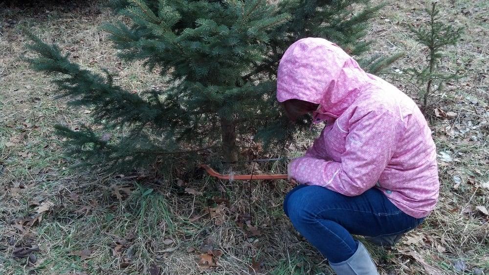 Oliveri Christmas Tree Farm: 7944 Sackett Rd, Bergen, NY