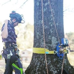 Scenic City Arborists - Chattanooga, TN - 2019 All You Need to Know