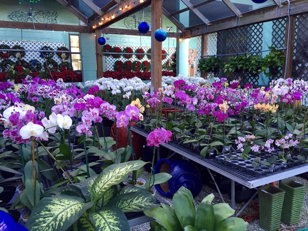 Marc Plant Store: 1401 Seminary St, Key West, FL