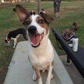 Photo Of Hawaii Kai Dog Park   Honolulu, HI, United States. My Happy