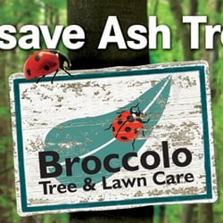 Photo Of Broccolo Tree Lawn Care Rochester Ny United States