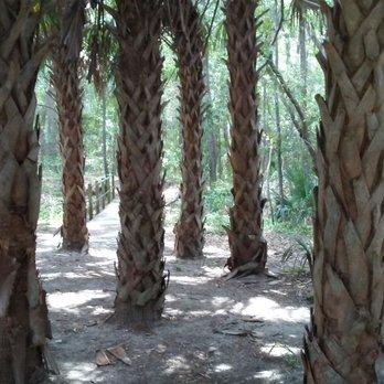 Jacksonville arboretum and gardens 143 photos 22 - Jacksonville arboretum gardens ...