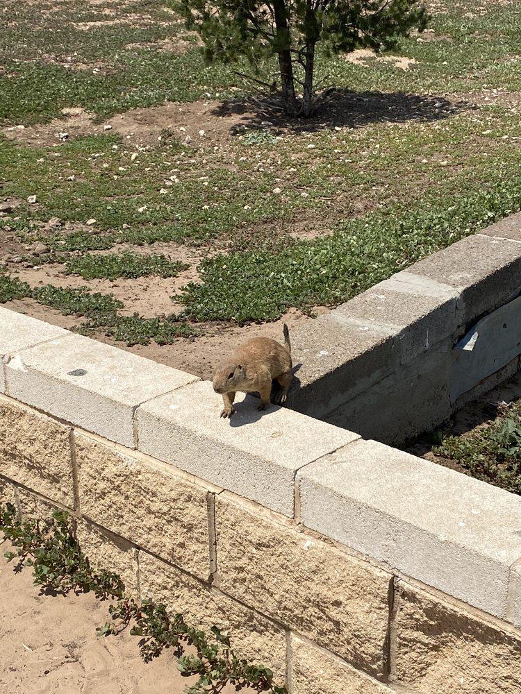 Social Spots from Prairie Dog Town