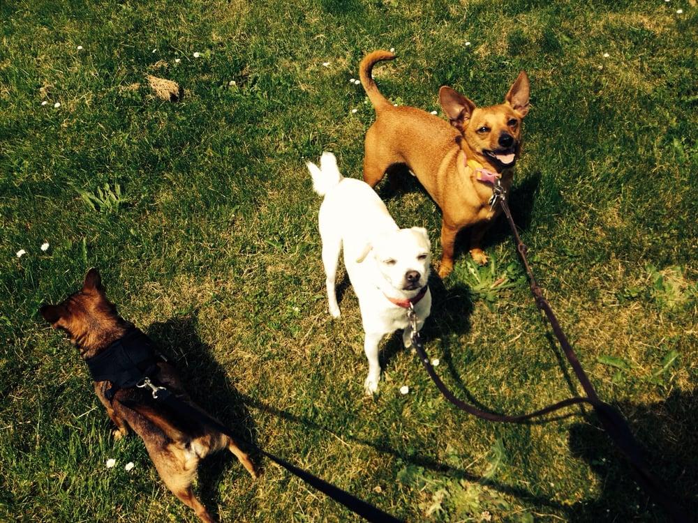 Zen Dog Walking Seattle