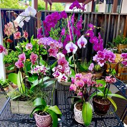 E Plant World 66 Photos 25 Reviews Nurseries Gardening 12511 San Mateo Rd Half Moon Bay Ca Phone Number Last Updated December 10