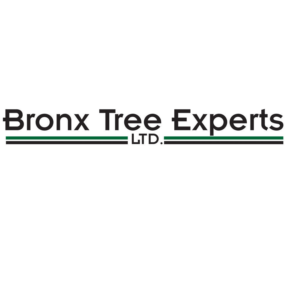 Bronx Tree Experts