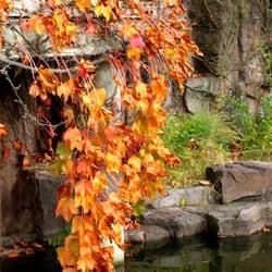 The new york chinese scholar s garden 273 foto e 31 for 1000 richmond terrace staten island ny