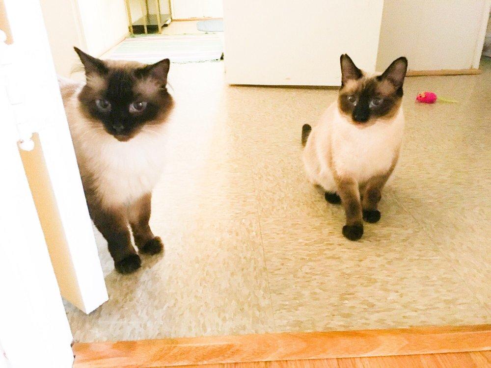 C-PUP Pet Walks: 6916 Oakridge Rd, Hyattsville, MD