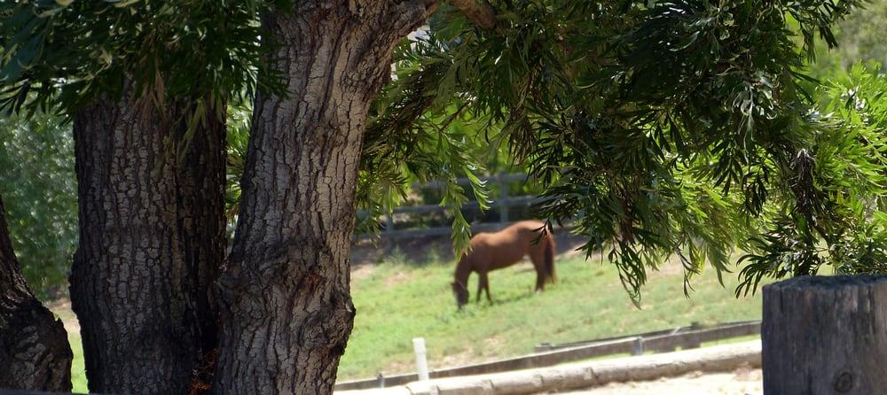 Horse Boarding North County San Diego: Bonsall, CA