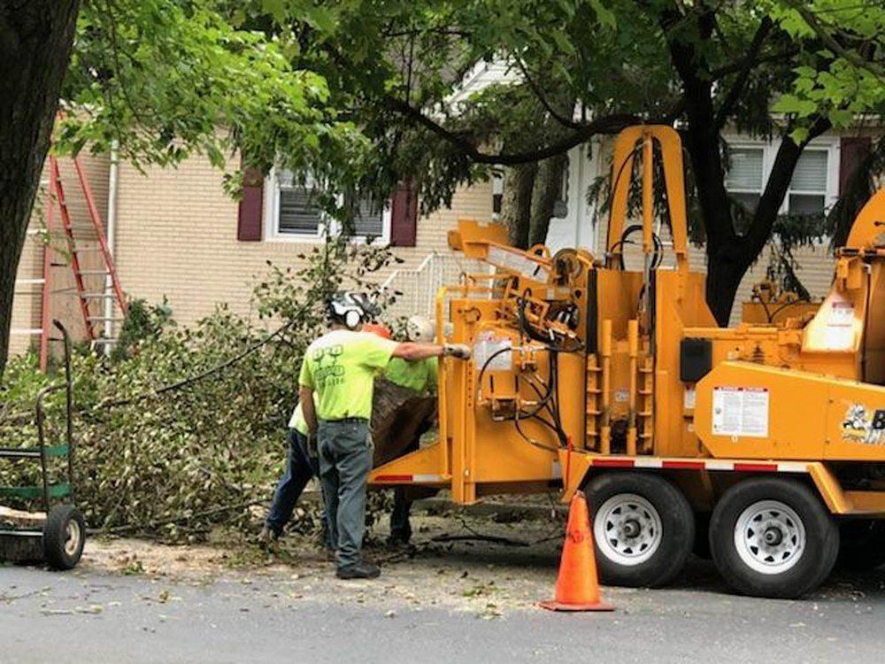 B & B Tree Service: 9 7th Ave, Glendora, NJ
