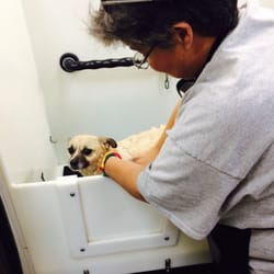Self serve pet spa 50 photos 29 reviews pet groomers 7401 photo of self serve pet spa bakersfield ca united states miss waddles solutioingenieria Images