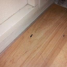 Photo Of Red Roof Inn Staunton   Staunton, VA, United States. Dead Bugs