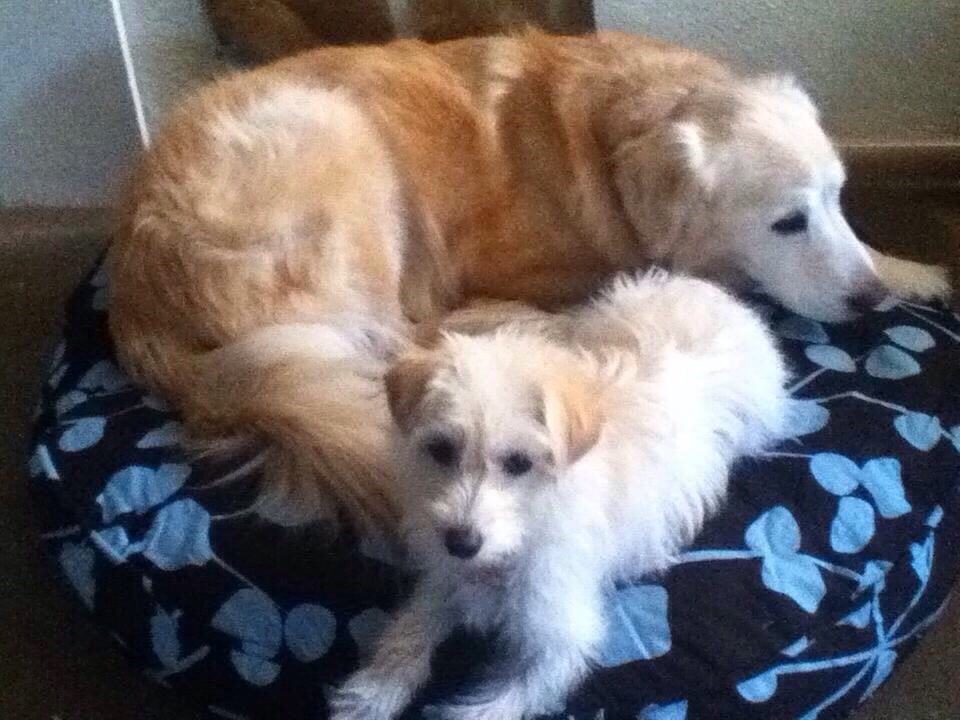 Salt Lake City Humane Society Dogs