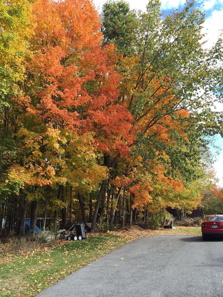 Lubrano Tree Care: Cobleskill, NY