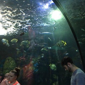 The Virginia Aquarium Marine Science Center 583 Photos