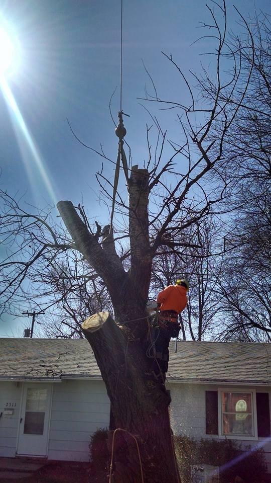 Leaf It To Us Total Tree Care Plus: 1209 Industrial Dr, Villa Grove, IL