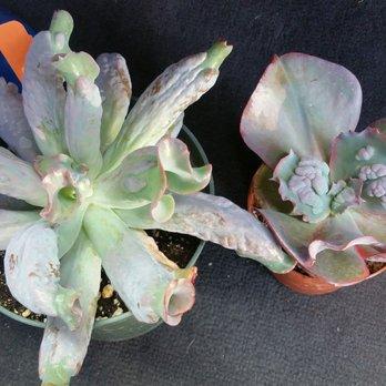 terra sol garden center 52 photos 30 reviews nurseries