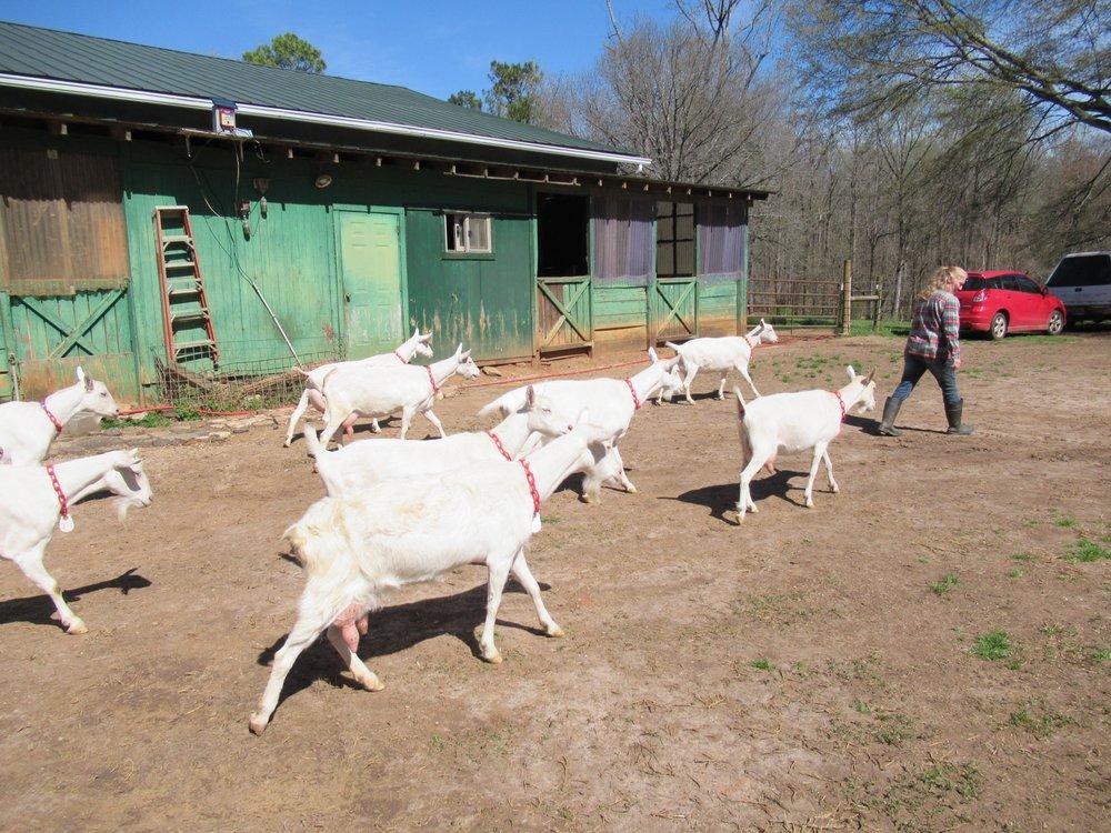 Decimal Place Farm: 4314 Almach Ave, Conley, GA