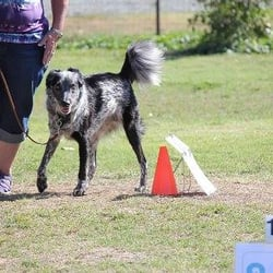Dog Training Modesto Ca
