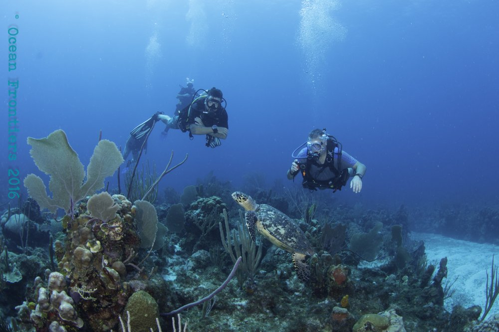 Ocean Frontiers: 344-6 Austin Connolly Dr, Grand Cayman, MA