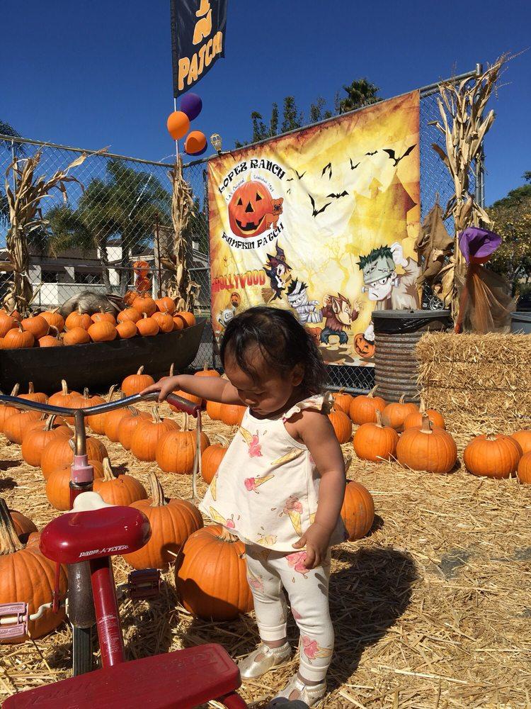 Lopez Ranch Pumpkin Patch & Christmas Trees: 1020 Victoria Ave, Venice, CA
