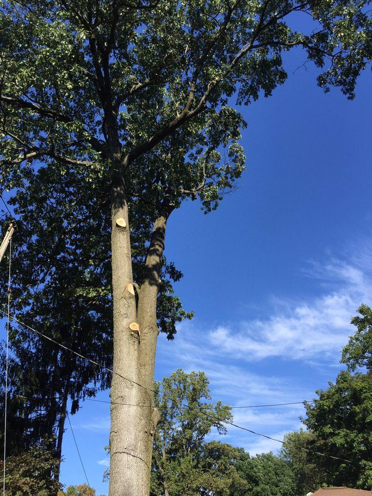 Popular Tree Service: 1704 Harrison Ave, Wilmington, DE