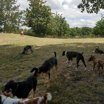 Seatac Dog Parks