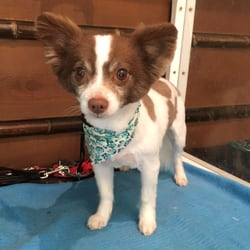 Star dogs 474 photos 75 reviews pet groomers 7889 university photo of star dogs la mesa ca united states solutioingenieria Image collections