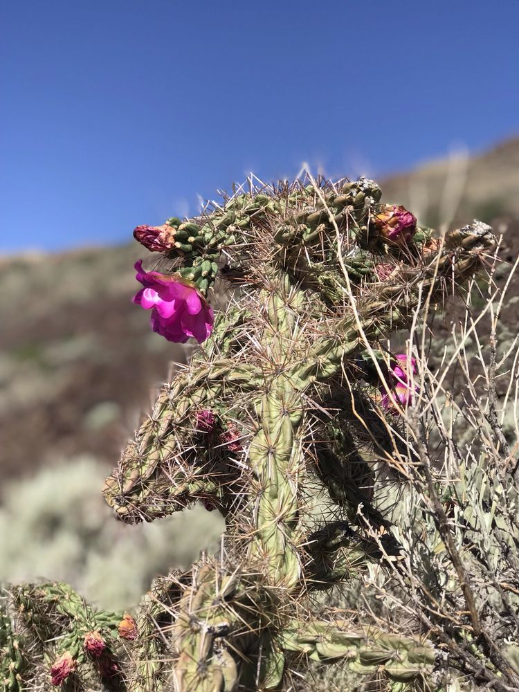 Orilla Verde Recreation Area: 2873 North State Rd 68, Pilar, NM