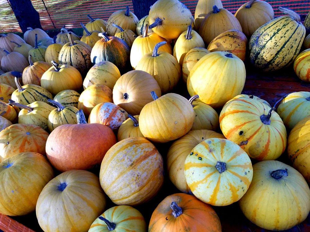 Jim's Pumpkin Farm: N124W17781 Lovers Ln, Germantown, WI